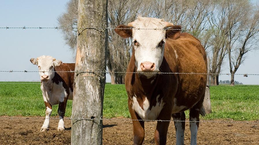 Genómica, sanidad y protocolos de alimentación, ejes de los bovinos en ArgenCarne