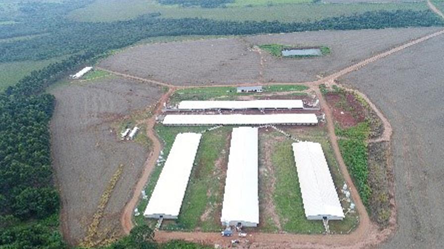 Porcicultura en Paraguay